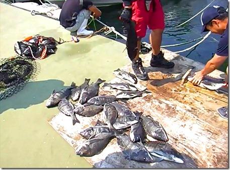 チヌのフカセ釣り夏攻略TOP